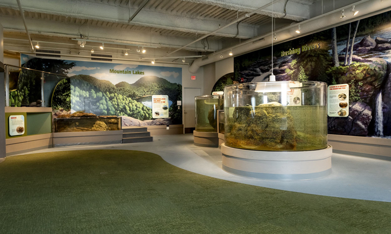 Watershed Aquariums, Photo Credit: Sean Alonzo Harris Photography, courtesy of Children's Museum and Theatre of Maine