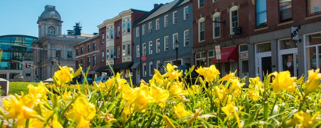 Yellow Flowers in Old Port with Brick Buildings, Photo Credit: Corey Templeton