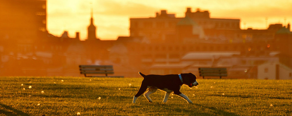 Portland Dog Sunset, Photo Credit: Corey Templeton