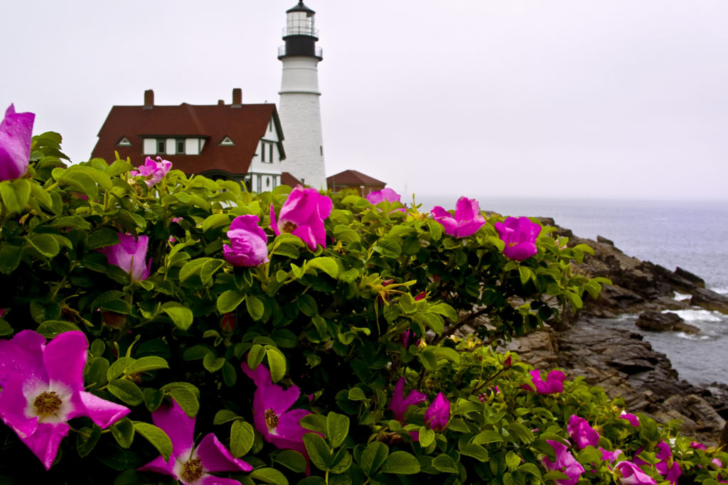 Portland Head Light Spring, Photo Courtesy of CFW Photography