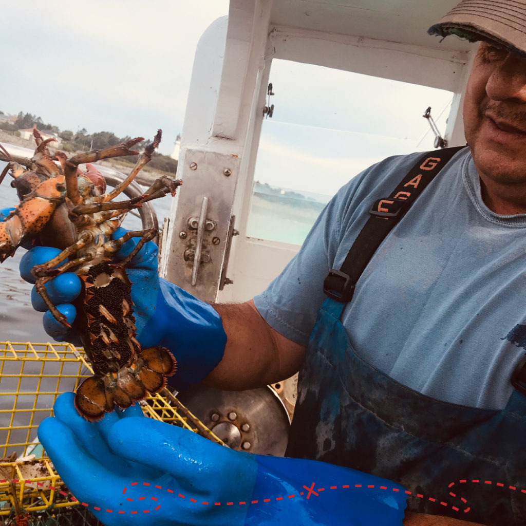 Lobster Done Local, Pete the Lobsterman - Photo Credit: GLP Films