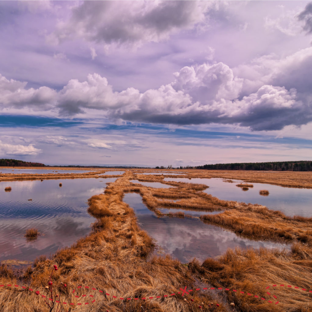 Wander South - Scarborough Marsh, Photo Credit: CFW Photography