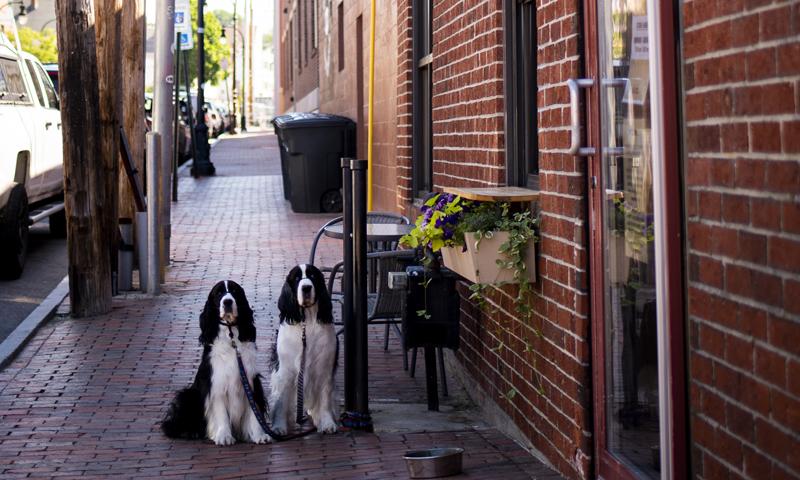 Dogs on Sidewalk. Photo Credit: Capshore Photography